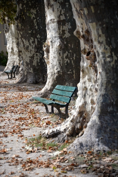 """A Bench in the Trees,"" a green bench adds color and intriguing scale next to huge plane trees that date to Napoleon's time."