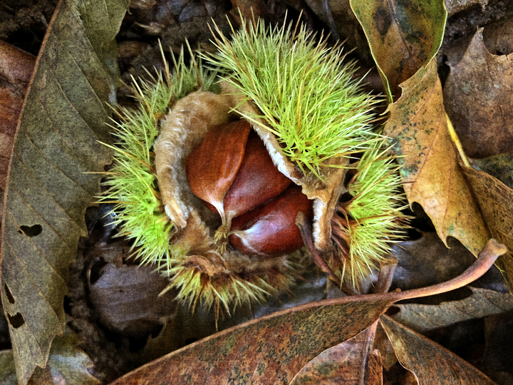 Nested Chestnuts